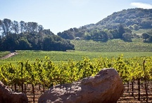 California Wine Country / Leave the grind of the city behind, and let the valley work its magic. https://www.peek.com/california/wine-country/ / by Peek