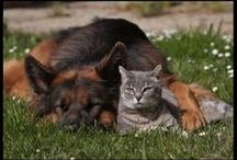CATS & DOGS TOGETHER / FUNNY AND WARMING TO THE HEART / by Jackie Walmer