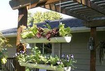 Gardening / by Judith 9848