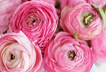 ranunculus... that is all / by Michelle Cormack