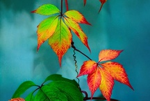 Turning colors.  Autumn / by Terry Purpus