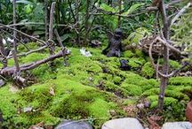 Moss and Lichen / by Faire Garden