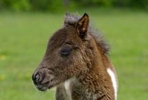 I love horses! / by Cathy Kurpil