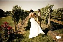 Vineyard Wedding / by Eva GoLightly