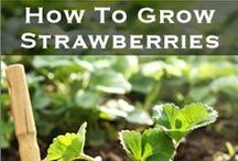 Gardening - Care of/How to / by Patti Craven