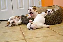 Silly pets / Laughter being the best medicine, this is my de-stress board. Thank you for sharing your pins!  Thank you for repinning! Repin as many as you want. / by Tamara Llanes