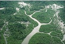 Mangroves / Thank you for sharing your pins! Thank you for repinning! / by Tamara Llanes