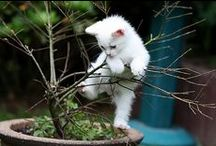 Cutie pies / I love to look at cute animals; the stress of the day just rolls away.  Thank you for sharing your pins and thank you for repinning!  Repin as many as you want.  / by Tamara Llanes