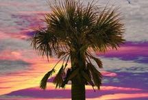 Palm trees / Thank you for sharing your pins! / Repin as many as you want. / by Tamara Llanes