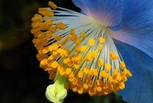 Poppies / Thank you for sharing your pins! / Repin as many as you want. / by Tamara Llanes