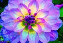 Pretty Flowers <3 / by Gayle Trainor (Quinn)