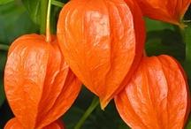 Flowers | Plants | Gardening, etc.. / by Marie Ville