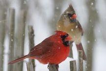 Cardinals / by Patty Gerker