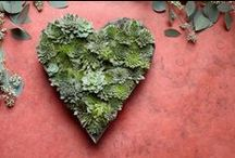 Succulent Succulence / Loving succulents - the more I know about them, the more I Love them! / by Jeanne Eige