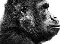 Animal Anatomy / by Mohammed Anuz