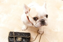 Frenchies / by Irene Carros