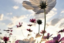 Gardening FUN / by Kimberly Highfield