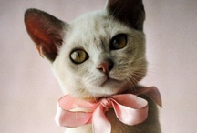 Kitty A Go Go / by Carol Roberts