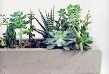 plants / by Deirdre Hanlon-Jones