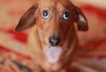 Pet Faces / Sweet Animals / by Jodi Pikulski Sherman