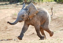 Elephants / by Tammi Verbarendse