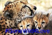 Honeymoon Competition / by Volcanoes Safaris