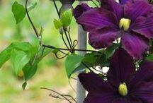 Regal / My favourite colour - purple / by Kylie Hodges
