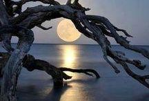 Moon / by Linda Anne Brown