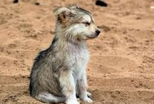 Cute animals - Animaux mignons / by kobaitchi