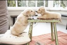 Cuddle Corner: Cute Animals / Puppies and Kittens and anything cuddly! We just can't help ourselves / by Eve's Addiction