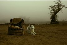 DOG DREAM / by Channing Tatum