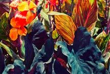 colour splash! / Gives you energy. / by Anna Kokki