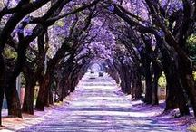 Take me there... / by Jennifer Schott