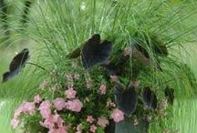 Patio Pots and Containers / by NationalGardenBureau
