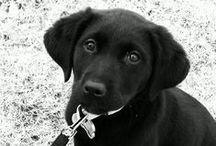 Everyone needs a dog  / by Natalie DeFranco