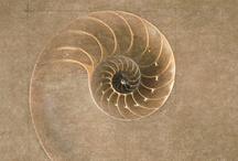 art - 2D - circle, spiral, dots / drawings, paintings, prints / by Christa Schadt