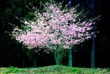 Tree & Path / by Misaki S