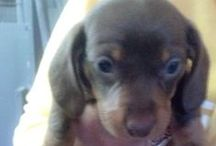 Ruby Burch the Doxie! / by Asheley Burch