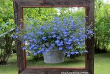 Garden Inspirations / by Little Cottage Shoppe