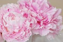 Pretty, pretty  Flowers / by Little Cottage Shoppe