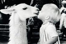 Zoo Babies / by NBC LA