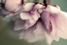Flowers / by Tabitha Stevens