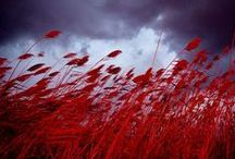 Seeing red / by Tabitha Stevens
