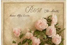 ℒ'amore è una rosa uno / . / by Earth Angel