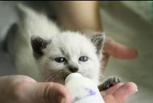 PAWS ♥ Foster Care  / by PAWS Progressive Animal Welfare Society