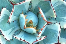Exotic Flowers / by Elizabeth Aurich
