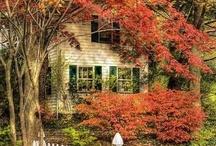 Fall / by Karen Roerdink