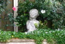 Michelle's Garden / pics from my garden / by Michelle Munzone