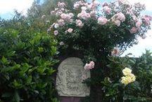 GARDENING / gardening tips and pics of my garden / by Michelle Munzone