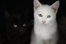Cat's Meow - Black/White / by Shari Fries